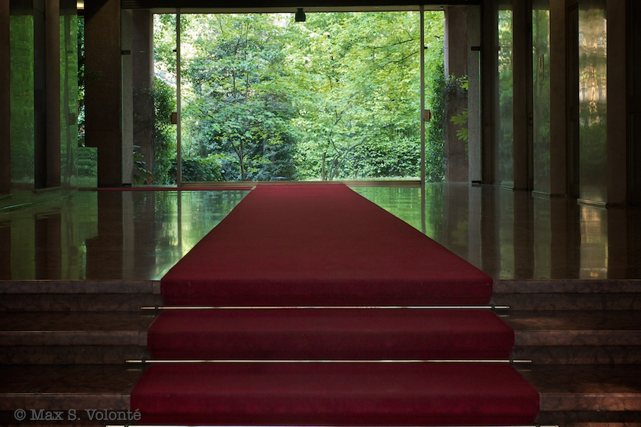 Red carpet, forest