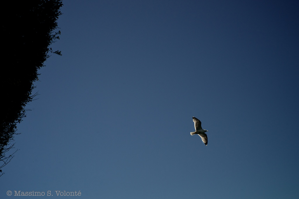 A seagull flying in a blue sky