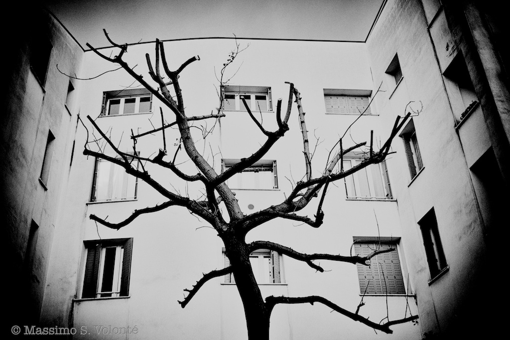 Naked tree and building