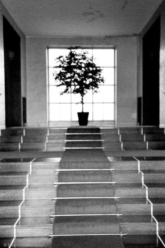 volonte fotografo milano - lone tree in the lobby