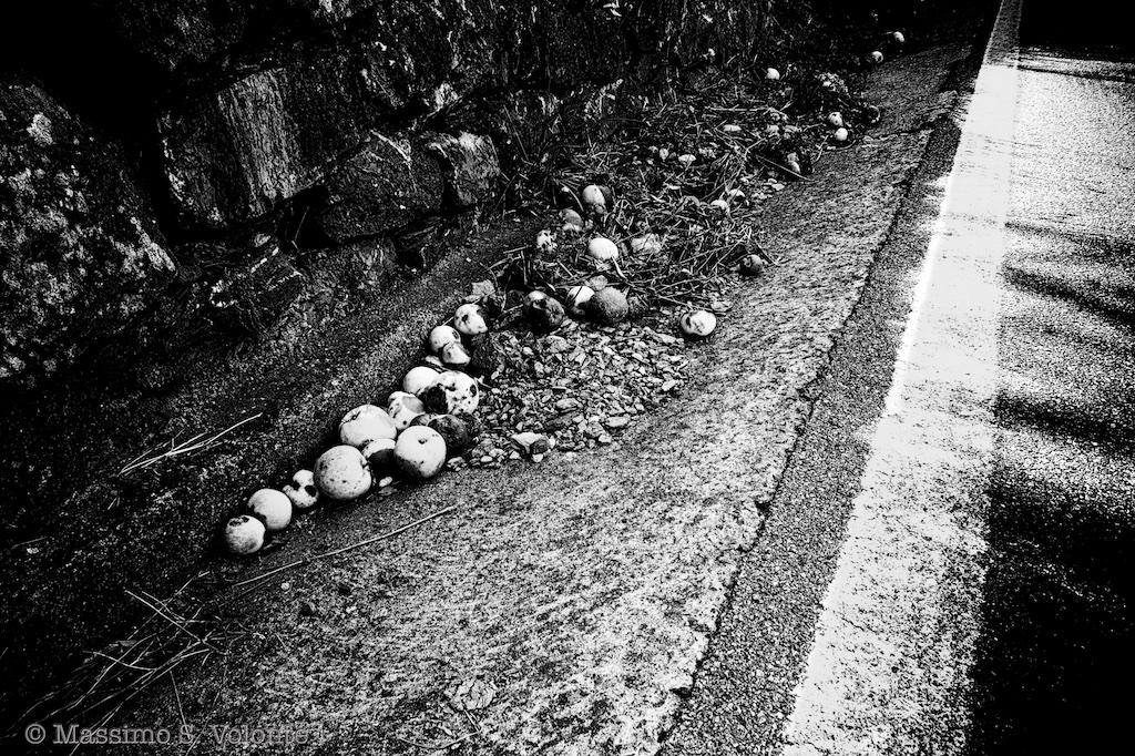 volonte fotografo milano - on the side of the road