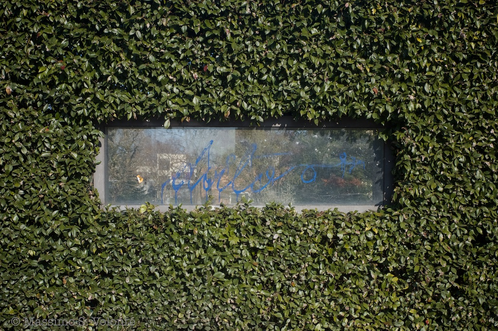 A narrow horizontal window surrounded by a wall of green leaves, fotografo milano