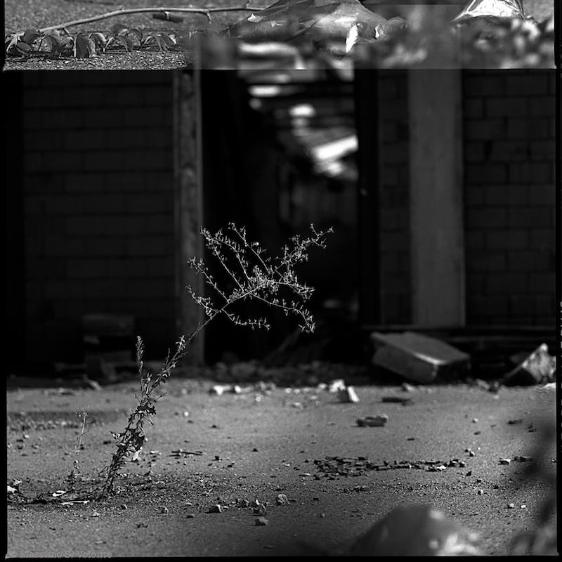 Piccola pianta che sopravvive nella desolazione e sul cemento