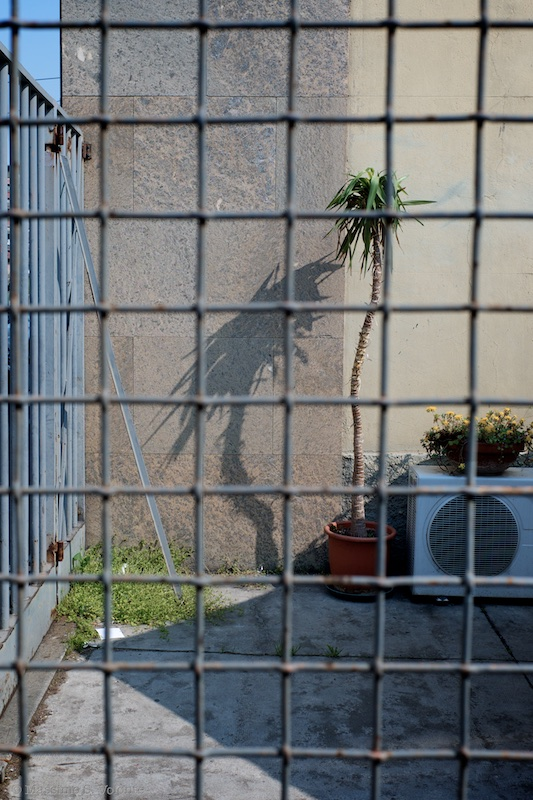 A sad lonely plant behind a fence, fotografo milano