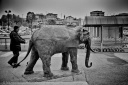 A man overpassing... an elephant, black and white, fotografo milano