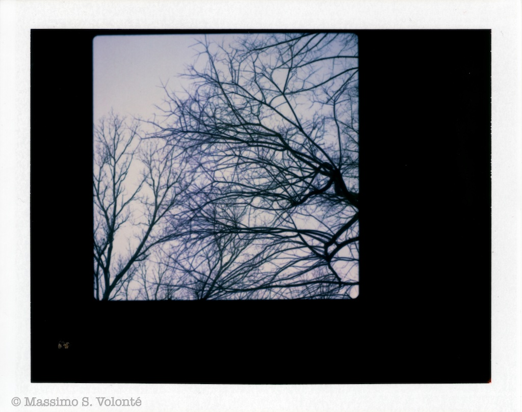 Naked trees on polaroid film, FP-100C, fotografo milano