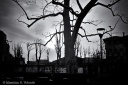 Naked skeleton trees in the city of nothingness, Monochrome, Volonte fotografo MIlano